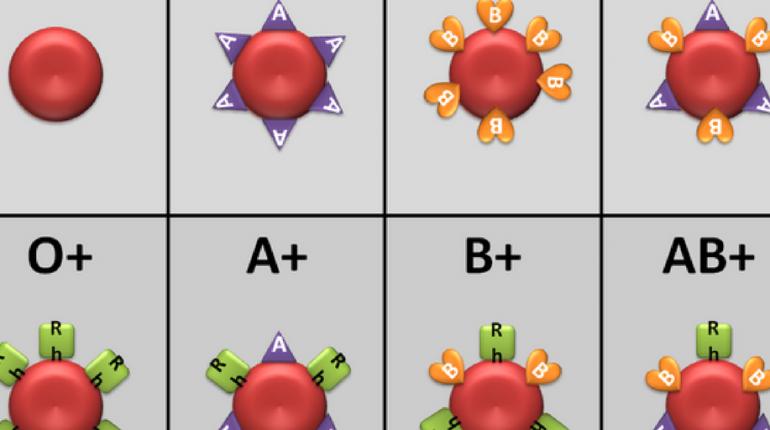 Types de groupes sanguins expliqués – A, B, AB et O | Groupe Sanguine