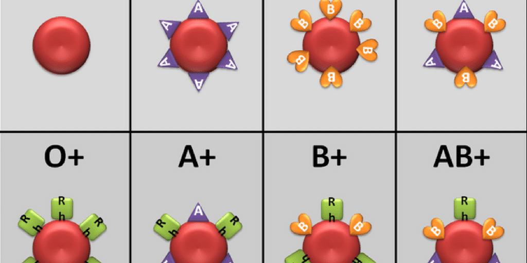 Types de groupes sanguins expliqués – A, B, AB et O